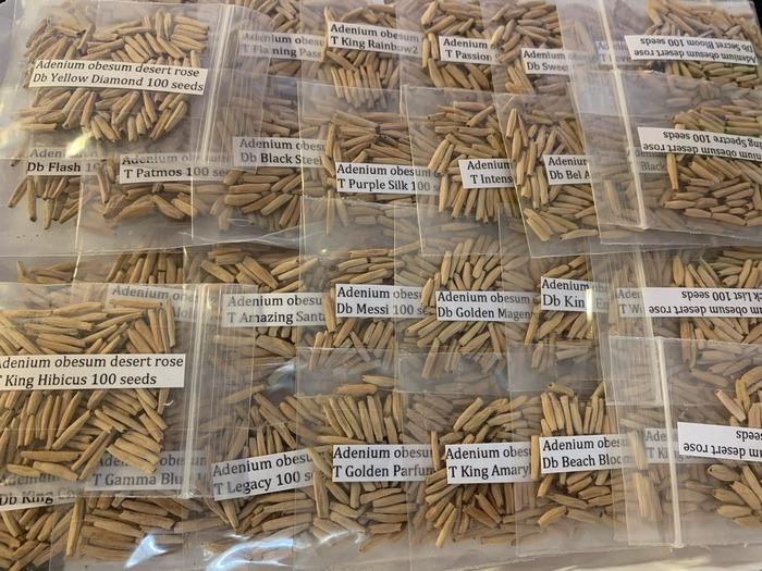 Семена или взрослые адениумы - как выбрать