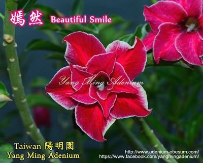 Beautiful Smile (Sweet Rough)