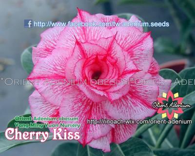 Cherry Kiss (Weave a Dream)
