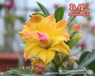 Dunhuang II