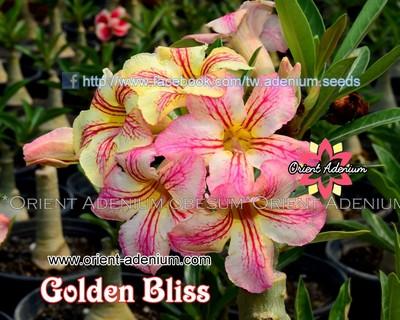 Golden Bliss