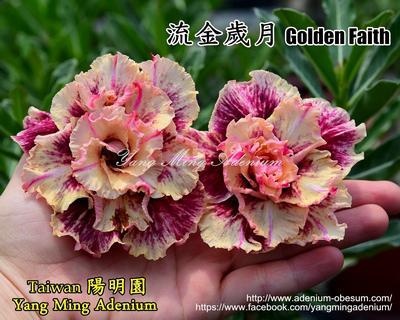 Golden Faith (Golden Years)