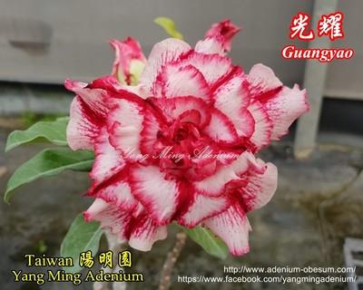 Guangyao