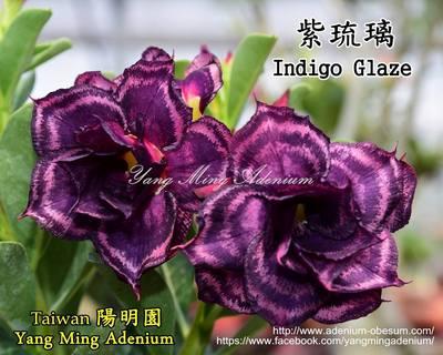 Indigo Glaze
