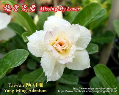 Missing my Lover