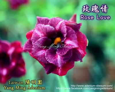 Rose Love (Magical)