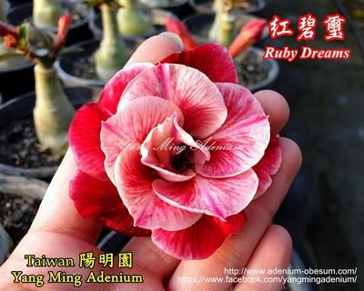 Ruby Dreams