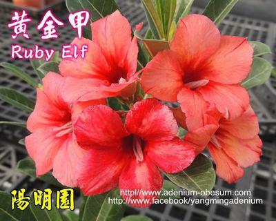 Ruby Elf