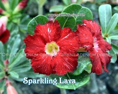 Sparkling Lava