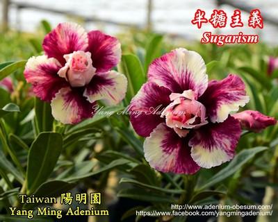 Sugarism