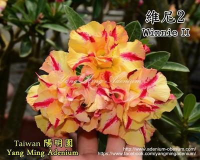Winnie II
