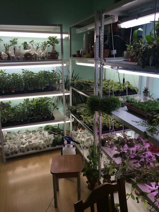Выращиваем на стеллажах или полках