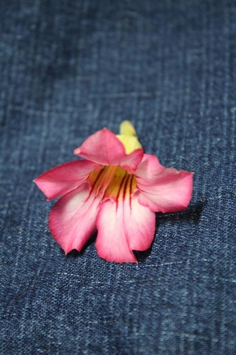 Для наглядности рассмотрим все важные элементы на одном цветке
