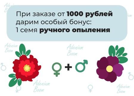 Бонус при заказе на сумму от 1000 рублей