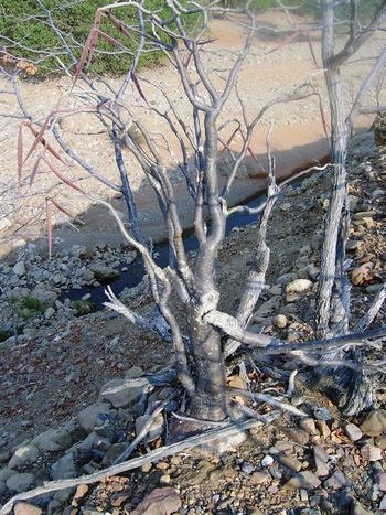 Высокий кустарник, Намибия