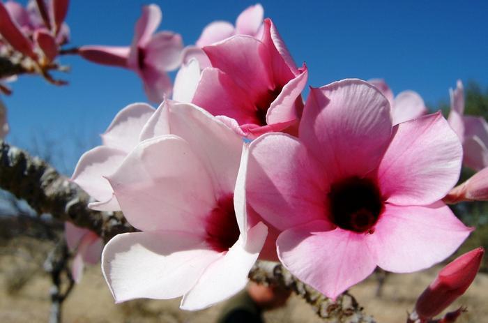 Форма цветка округлая, с темной сердцевиной