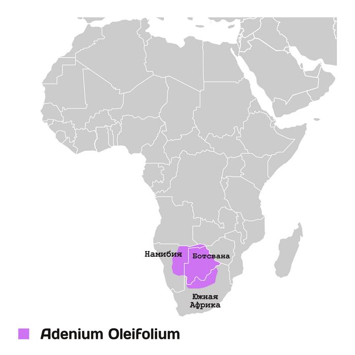 Территория произрастания адениума олиефолиум