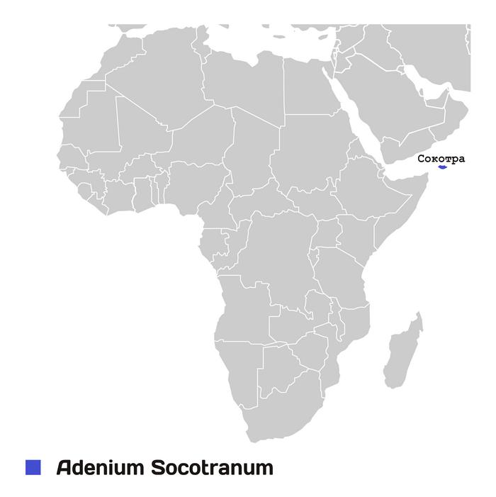 Территория произрастания адениума сокотранского