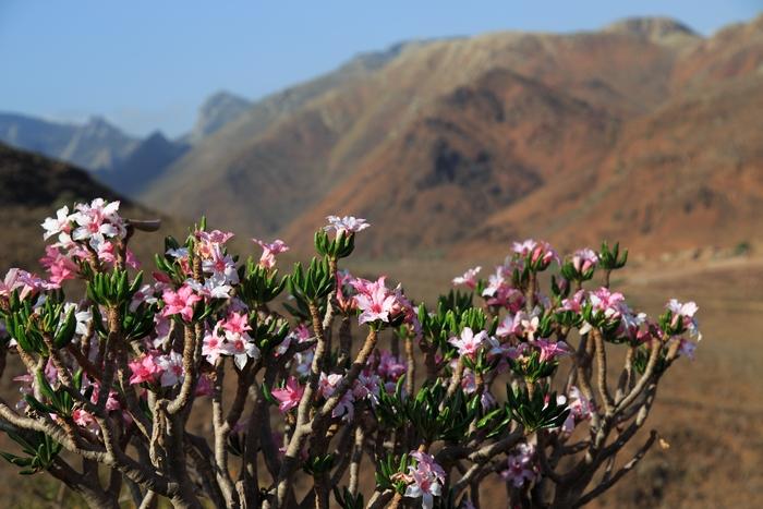 Цветение в дикой природе