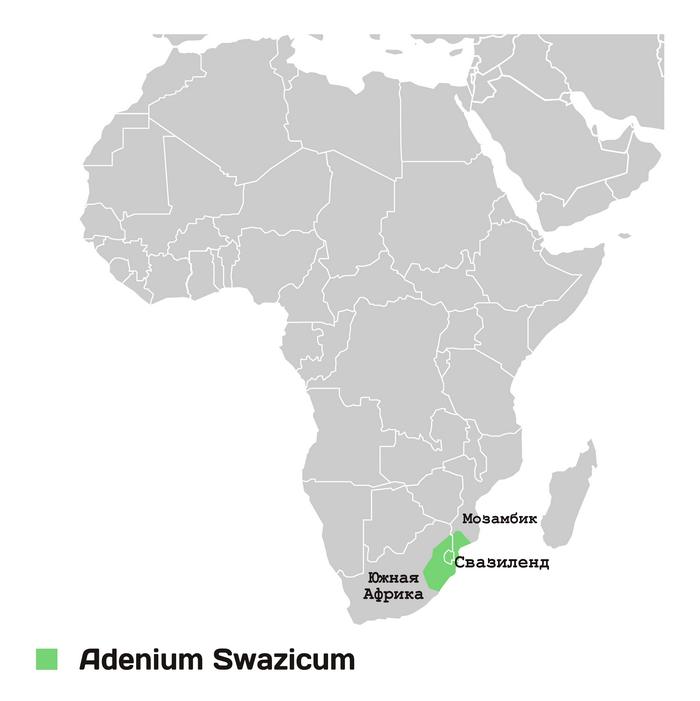 Территория произрастания адениума свазикума