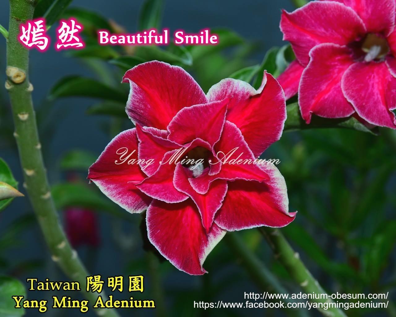 Прививка Beautiful Smile (Sweet Rough)