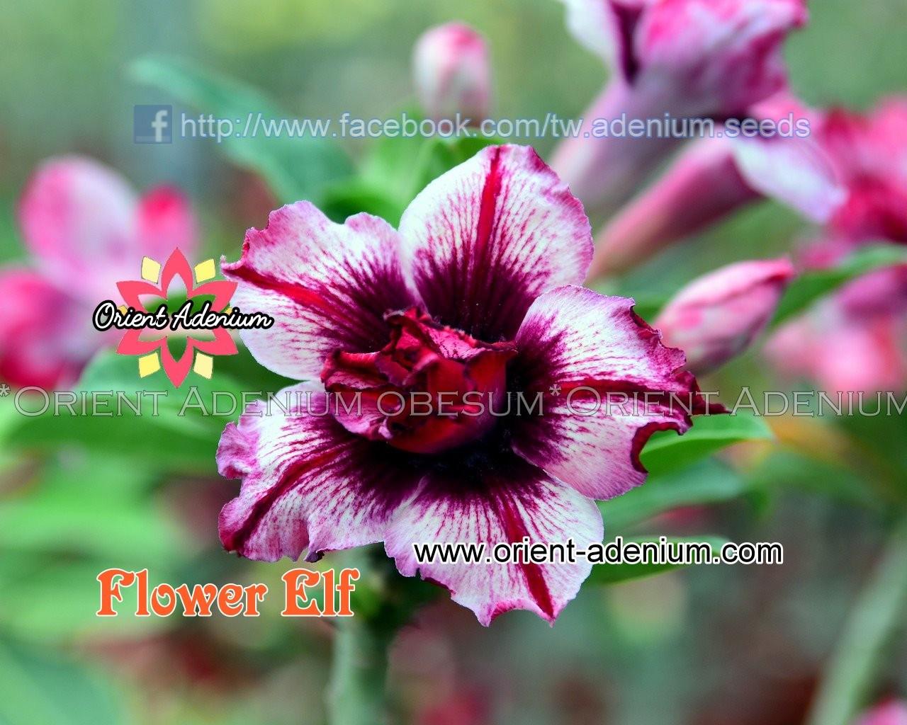 Прививка Flower Elf